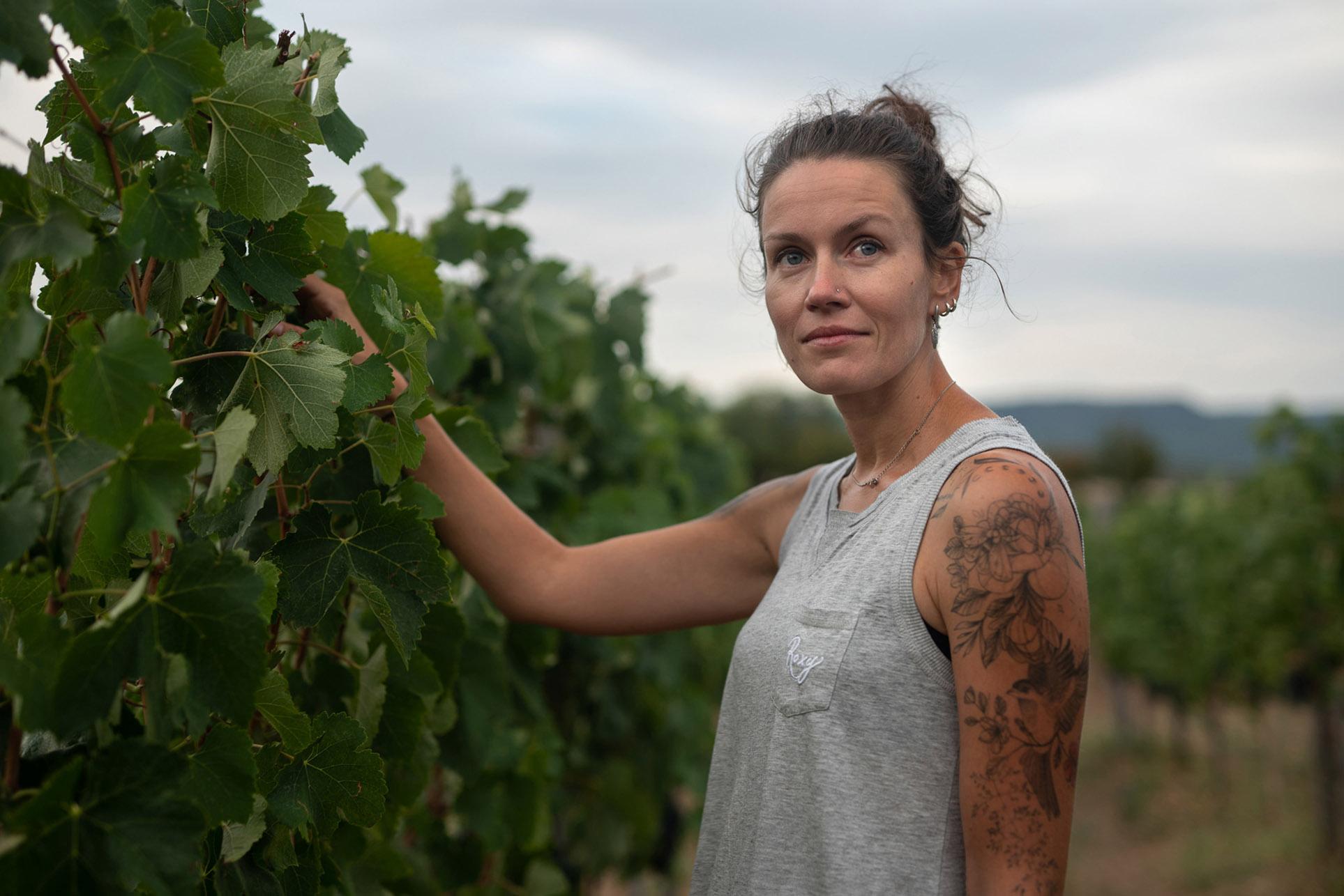 виноделы - сбор урожая и изготовление вина / фото 04