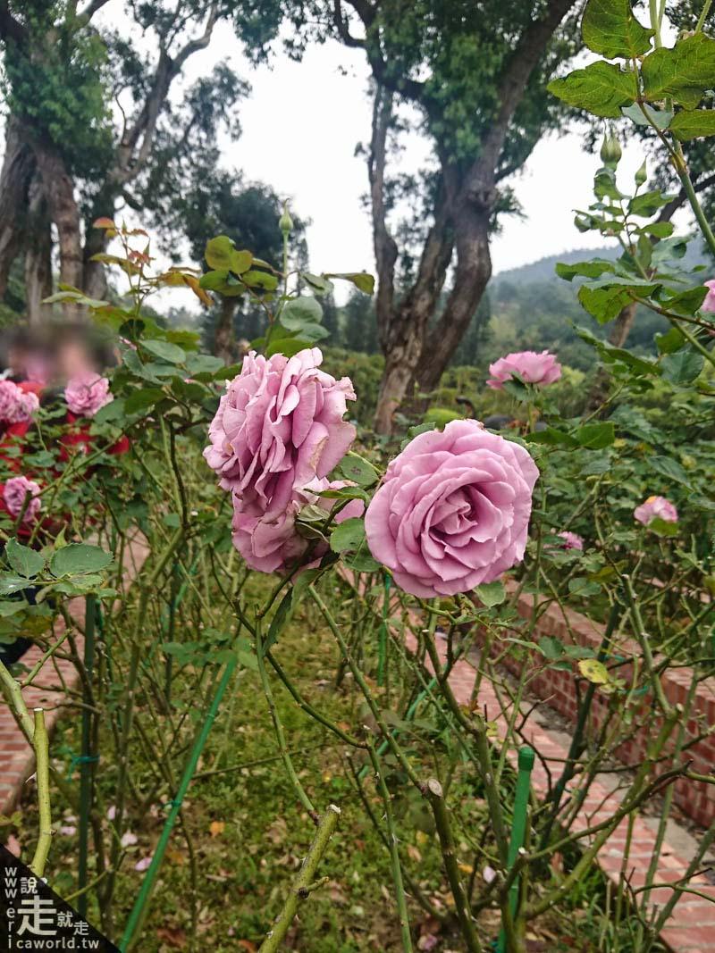 士林官邸 玫瑰園