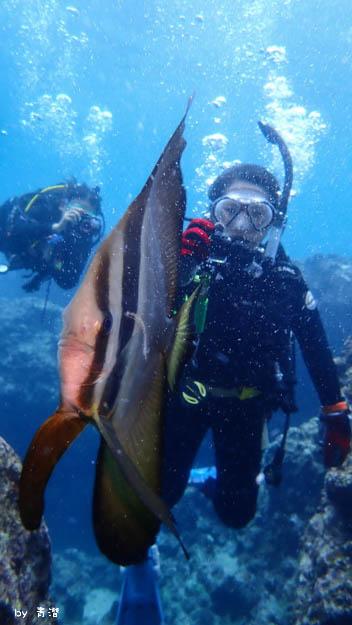 青洞潛水燕魚