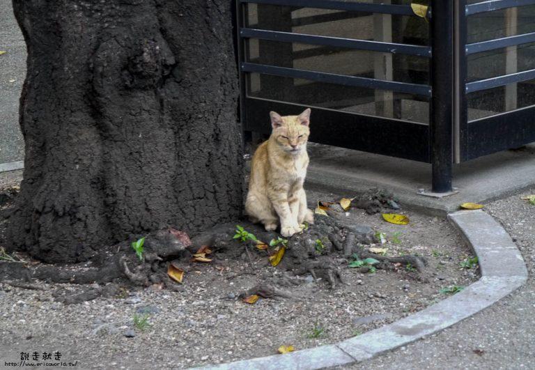 蓮馨寺貓咪