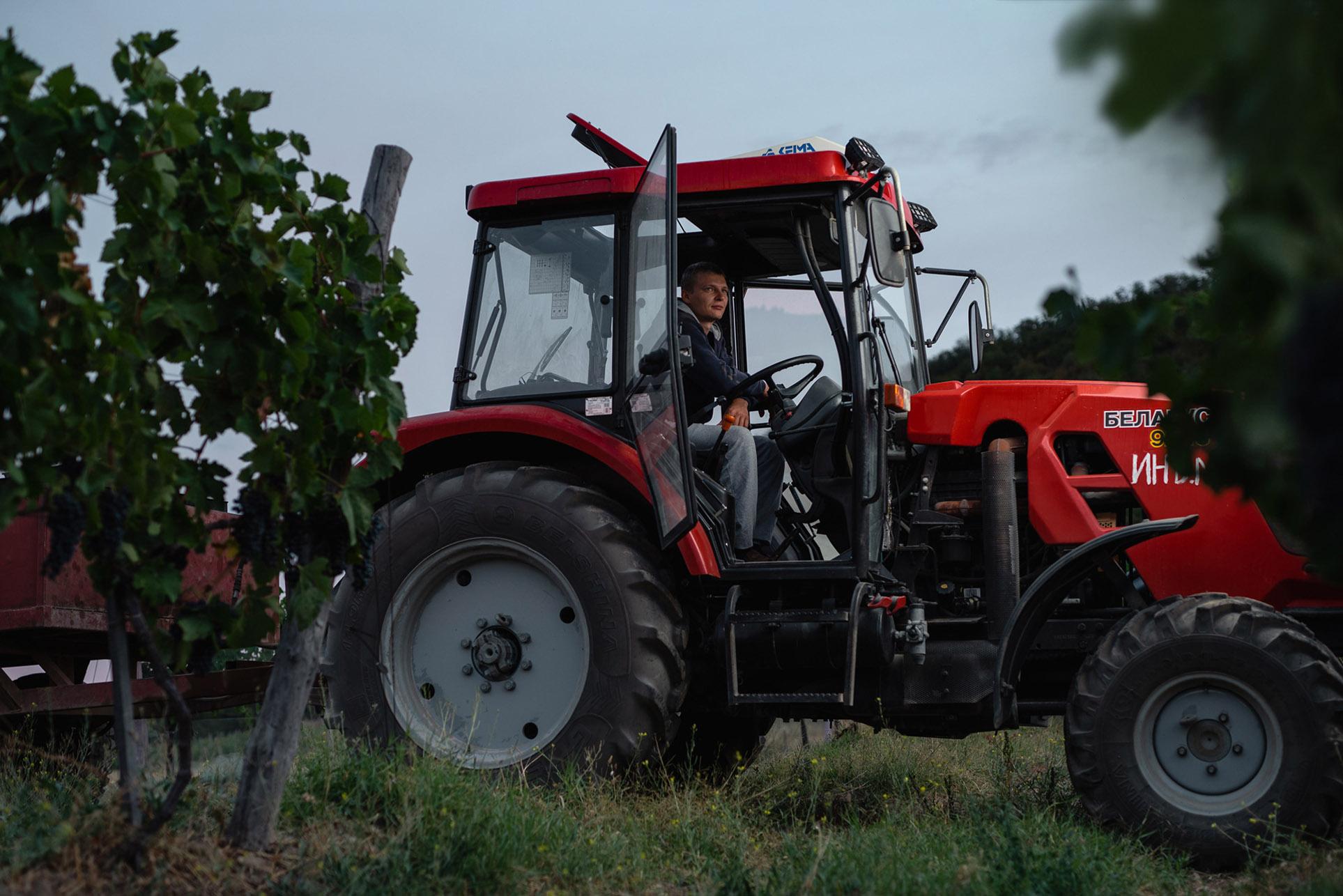 виноделы - сбор урожая и изготовление вина / фото 06