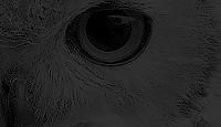 Pide rol - Página 2 GH53X0wF_o