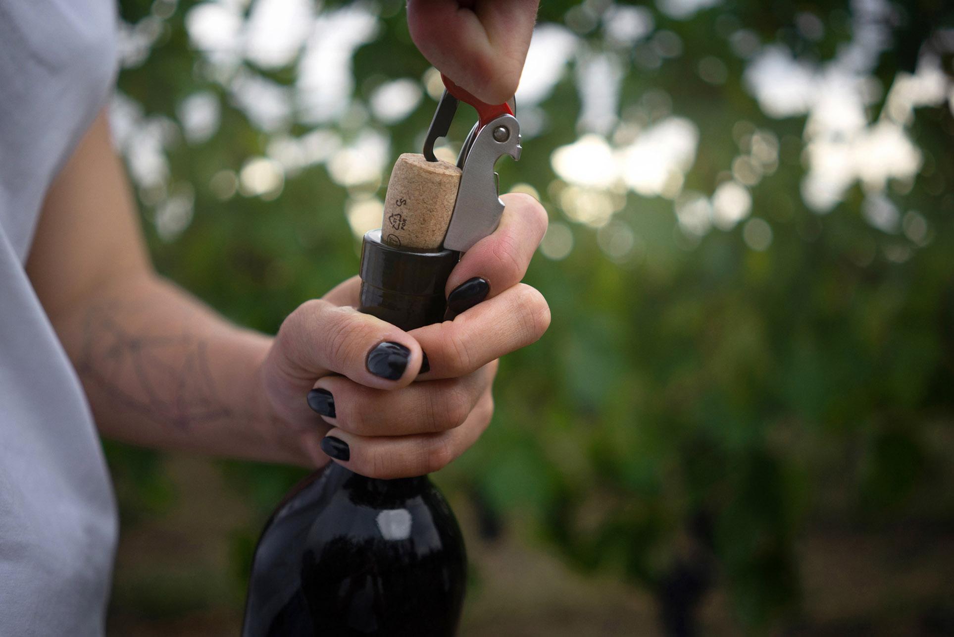 виноделы - сбор урожая и изготовление вина / фото 18