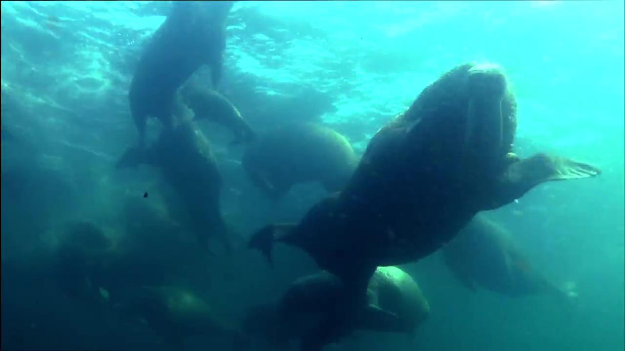 Osos Polares Una Odisea De Verano 720p Lat-Cast-Ing 5.1 (2012)