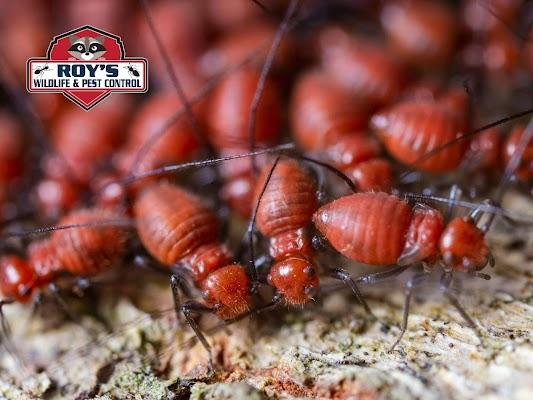 Roy's Wildlife and Pest Control