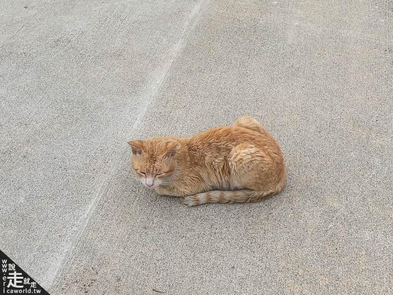 渡嘉敷島貓