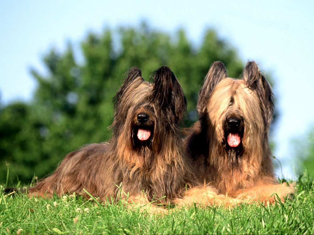 песики, псинки, собачки, щеночкиб dogs