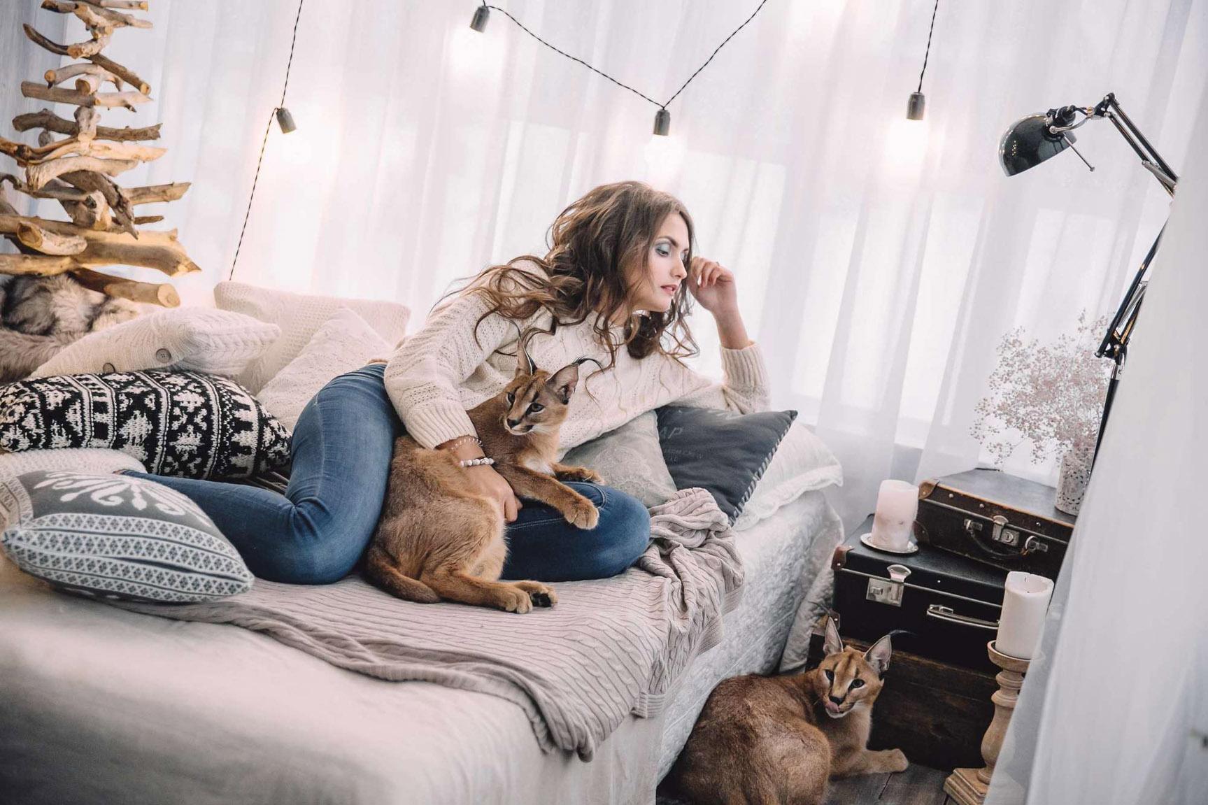 Каракалы, питомник Soul Cats - фотограф Ксения Чебиряк