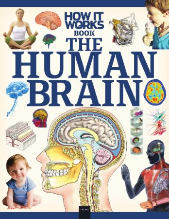 How It Works The Human Brain
