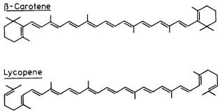 Carotene licopene