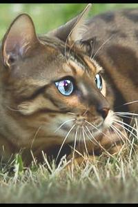 Tigerspots