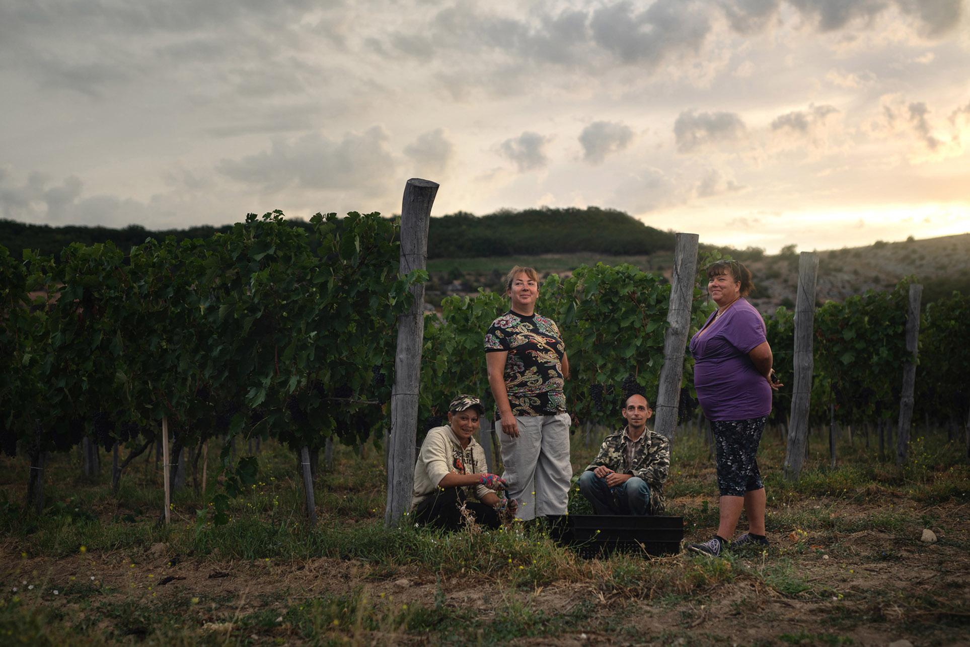 виноделы - сбор урожая и изготовление вина / фото 11