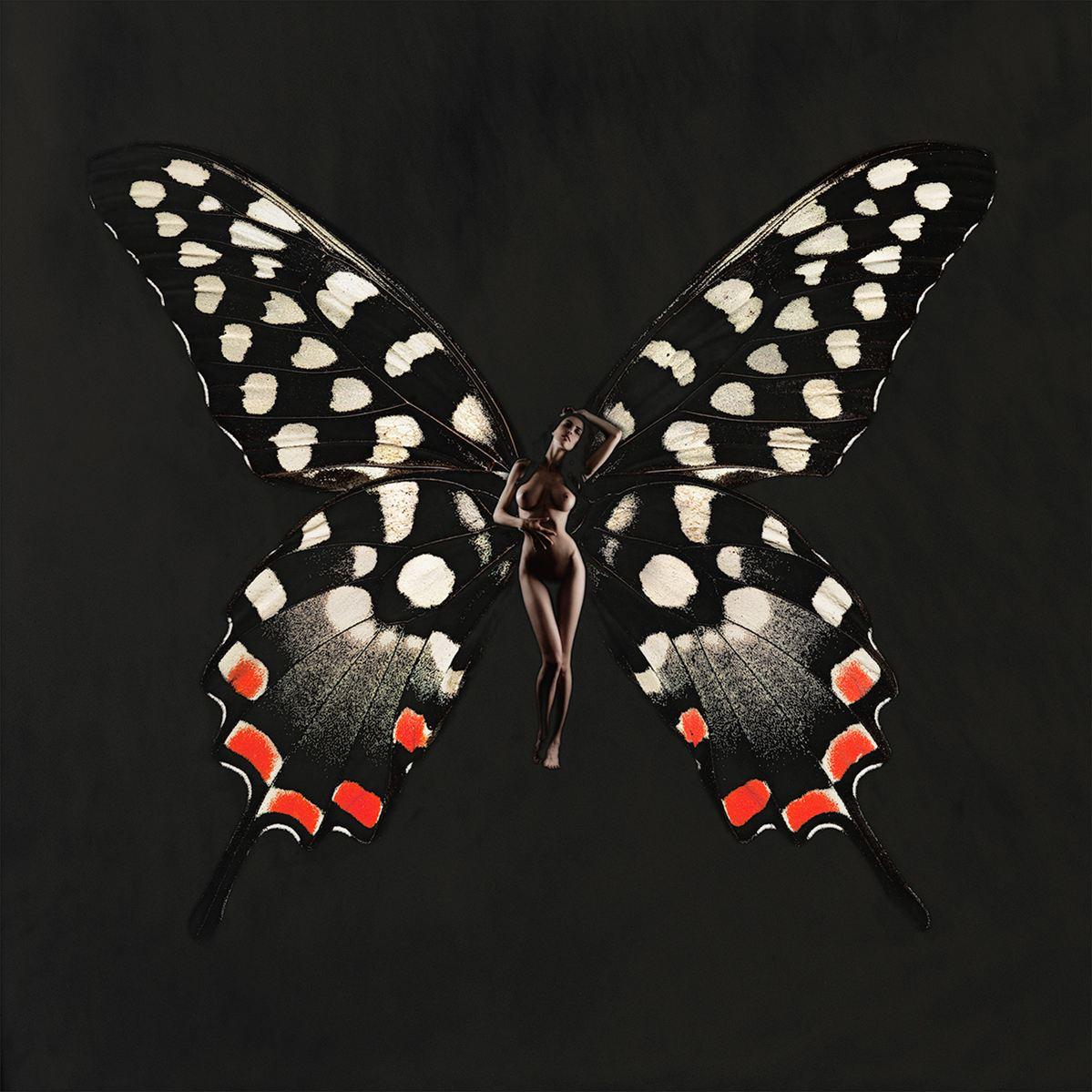 сюзанна ночная бабочка