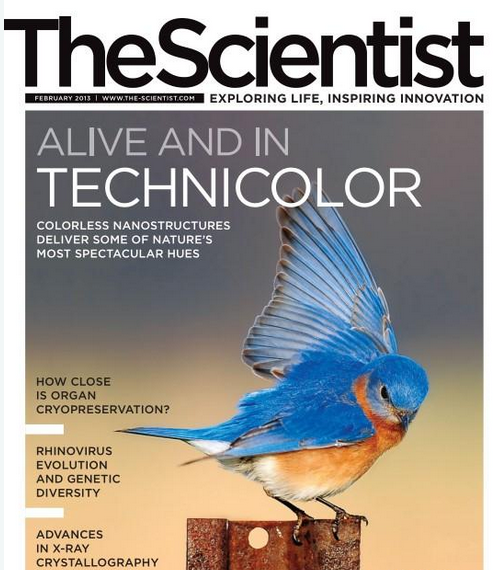 The Scientist – February 2013