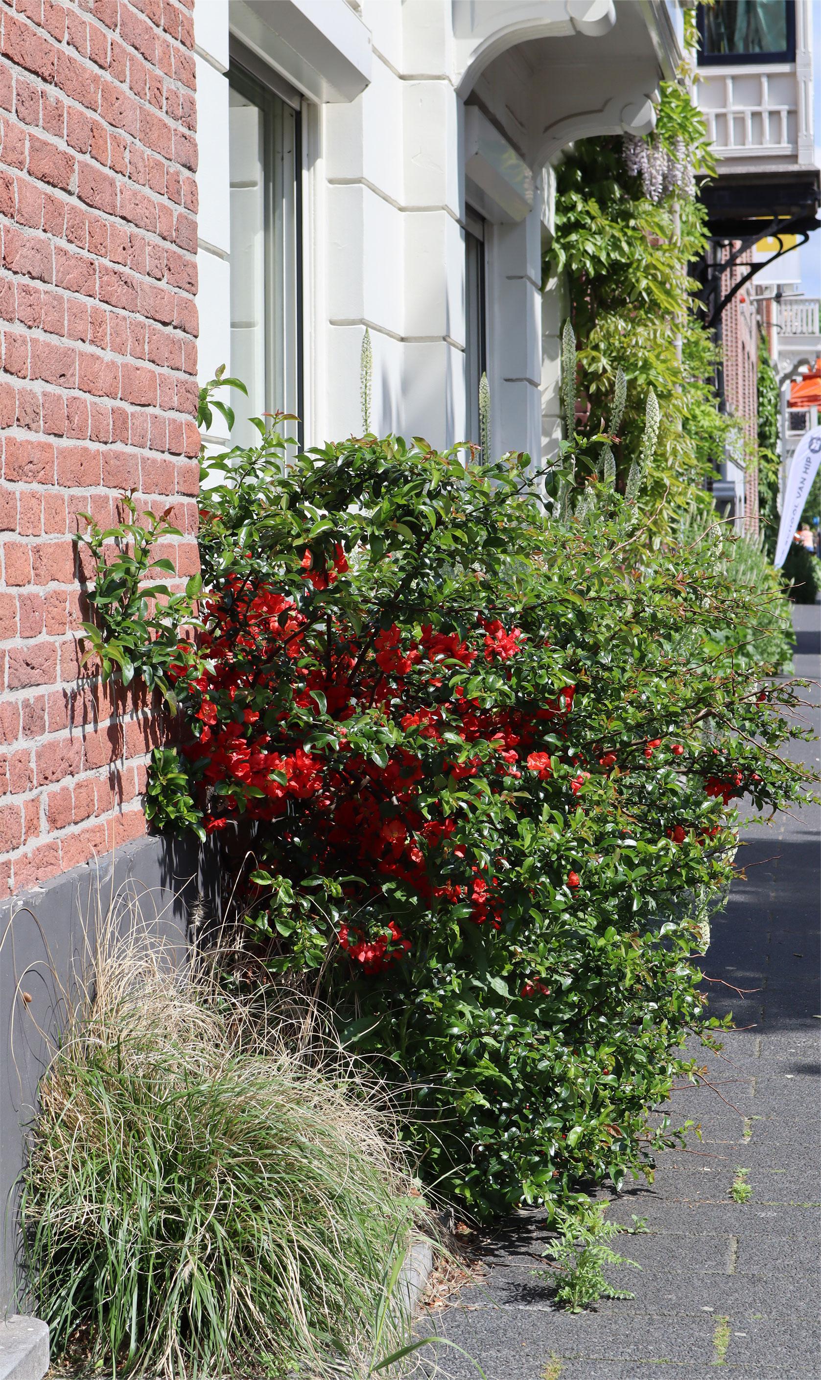 Фасадные сады