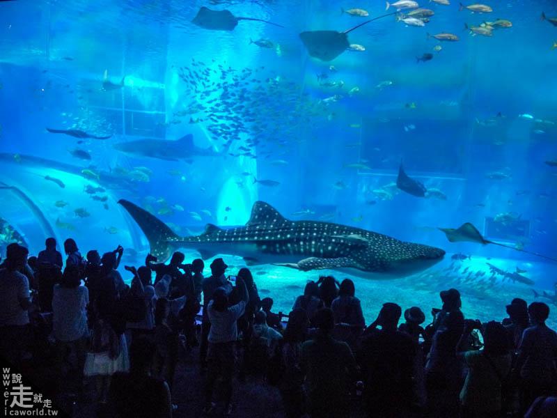 美麗海水族館 沖繩 不自駕