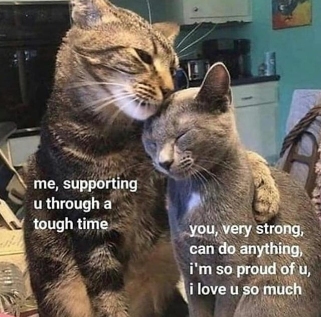 40 Wholesome Memes of the Day, Volume 01