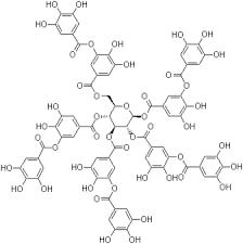 Acido gallico 1
