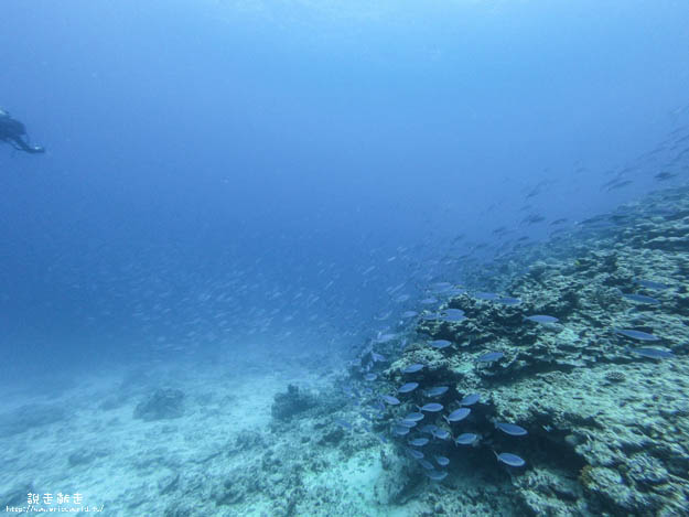 慶良間潛水