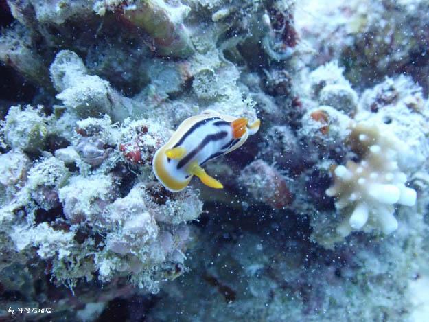 石垣島潛水