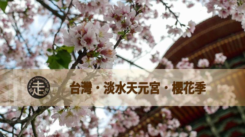 櫻花 賞櫻 吉野櫻 天元宮 淡水