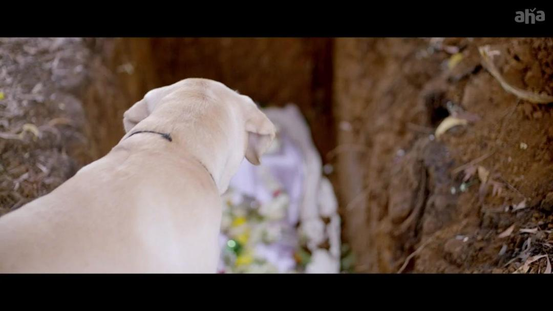Nenu Naa Nestham (2020) Telugu (Org Vers) 720p WEB-DL AVC AAC ESub-BWT
