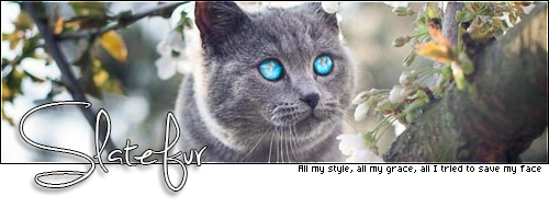 Build your own cat avatar UvSztmEd_o