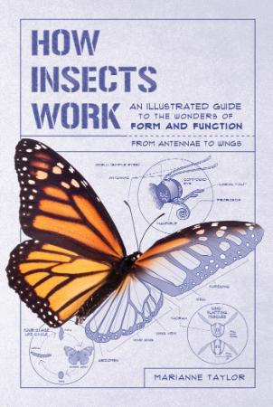 How Insects Works