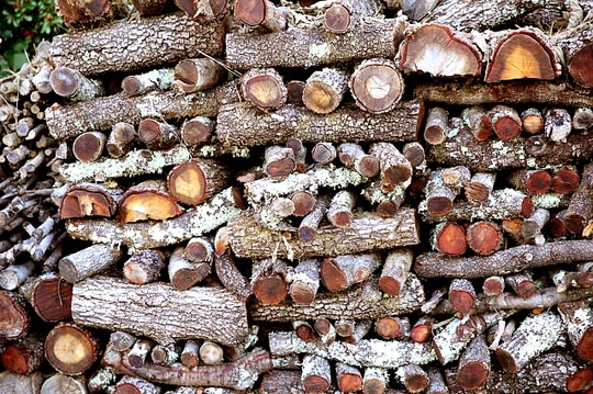 Catasta di legna di quercia