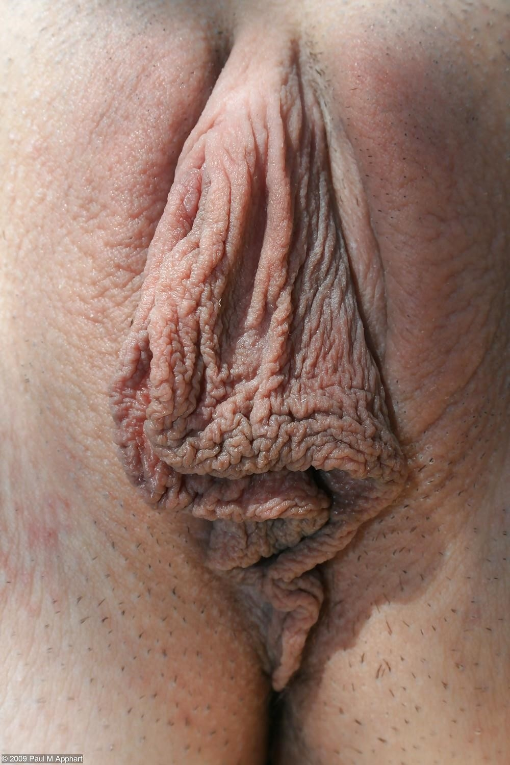 Big clit and large labia-8415