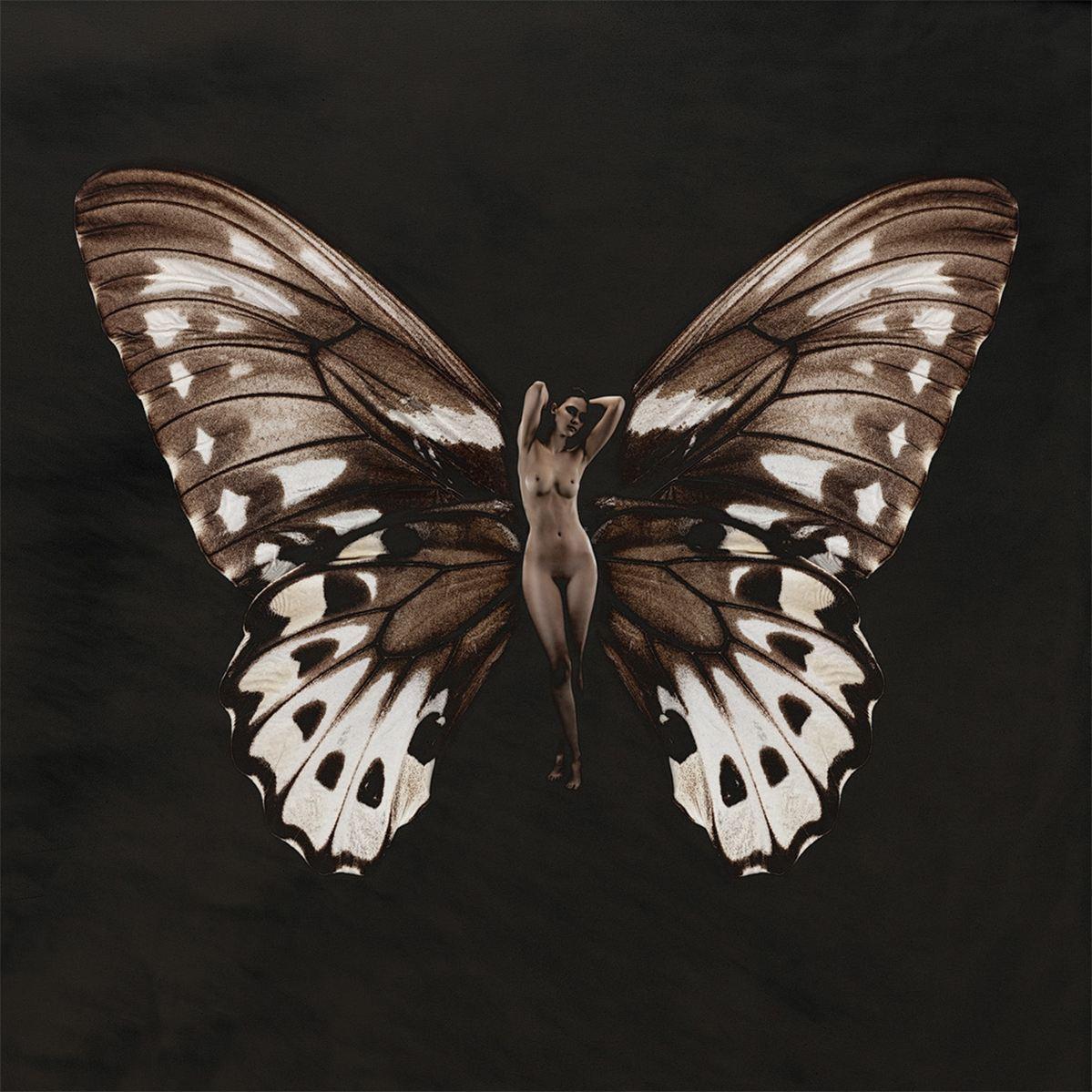 бабочка сюзанна ночная