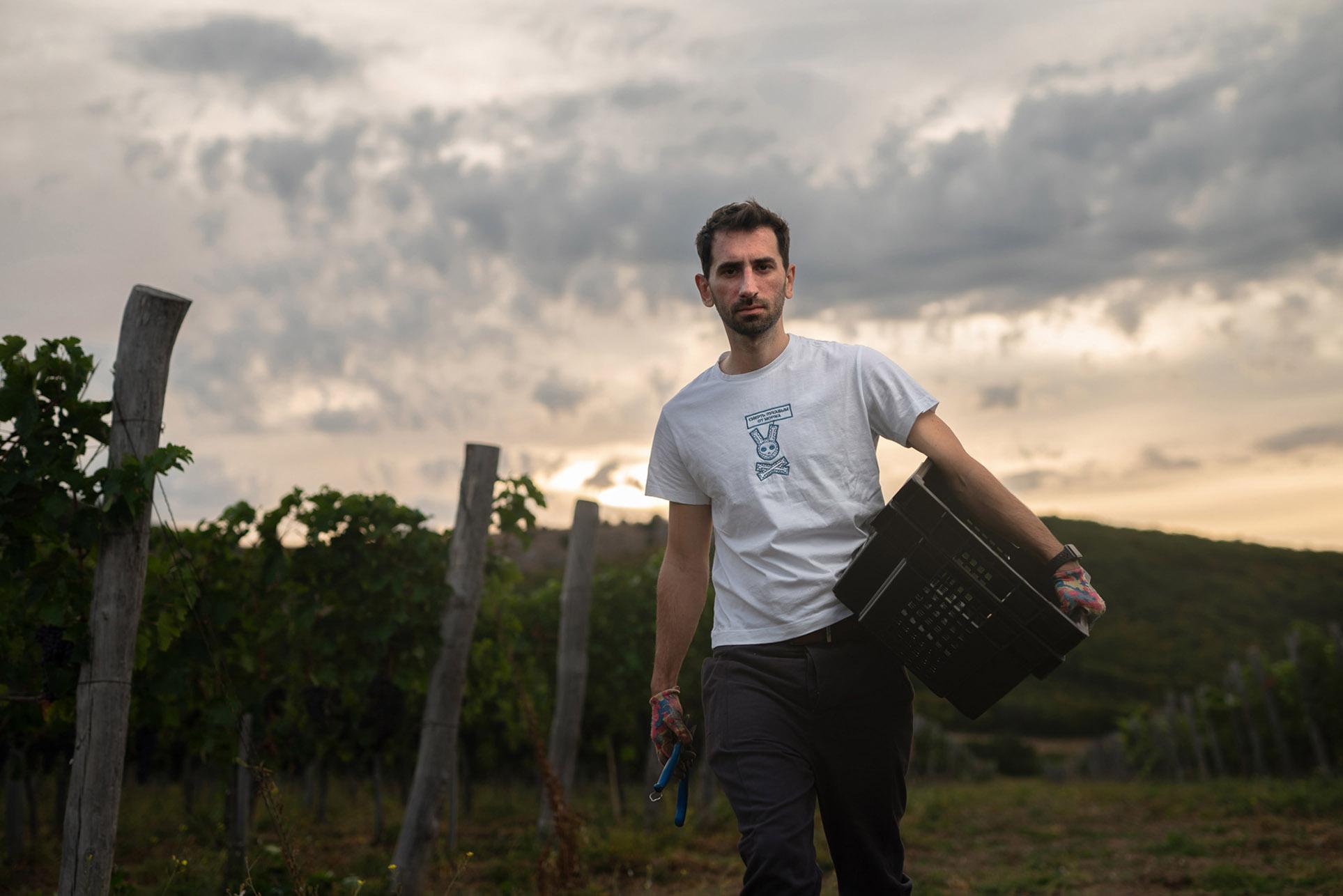 виноделы - сбор урожая и изготовление вина / фото 13