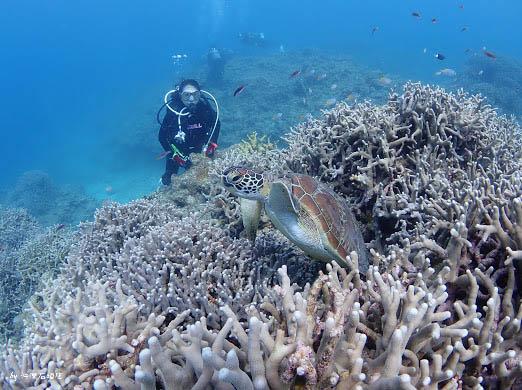 石垣島潛水海龜