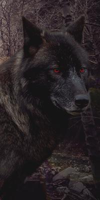 Radioactive Wolf 5VSONgzK_o