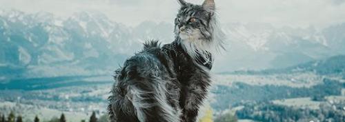 Shadowclan Kittenhub! 28iphVIh_o