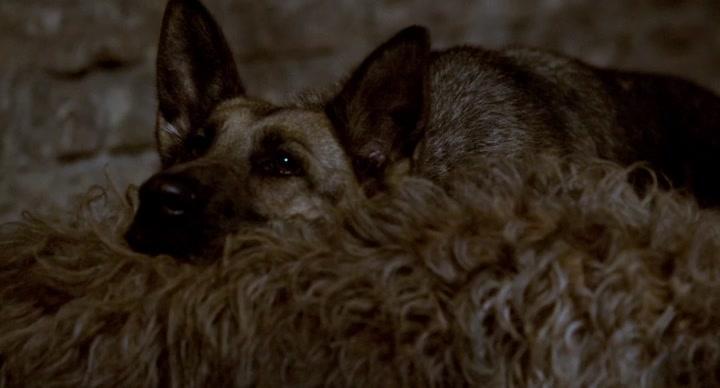 Shepherd The Hero Dog 2020 REPACK HDRip XviD AC3-EVO