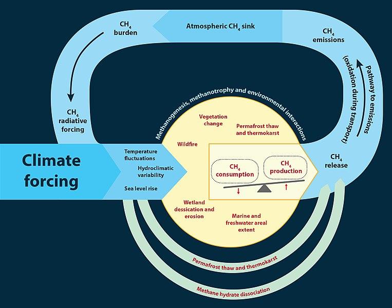 Boucle de rétroaction du méthane