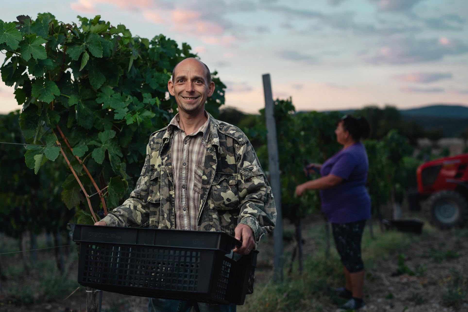 виноделы - сбор урожая и изготовление вина / фото 12