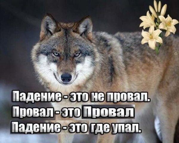 https://images2.imgbox.com/84/ef/aKLpGGmi_o.jpg