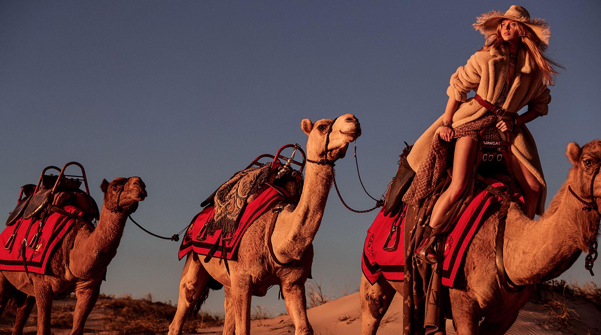 Утро в австралийской пустыне с верблюдами / фото 01