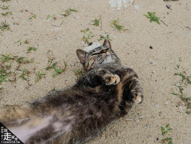 座間味島貓