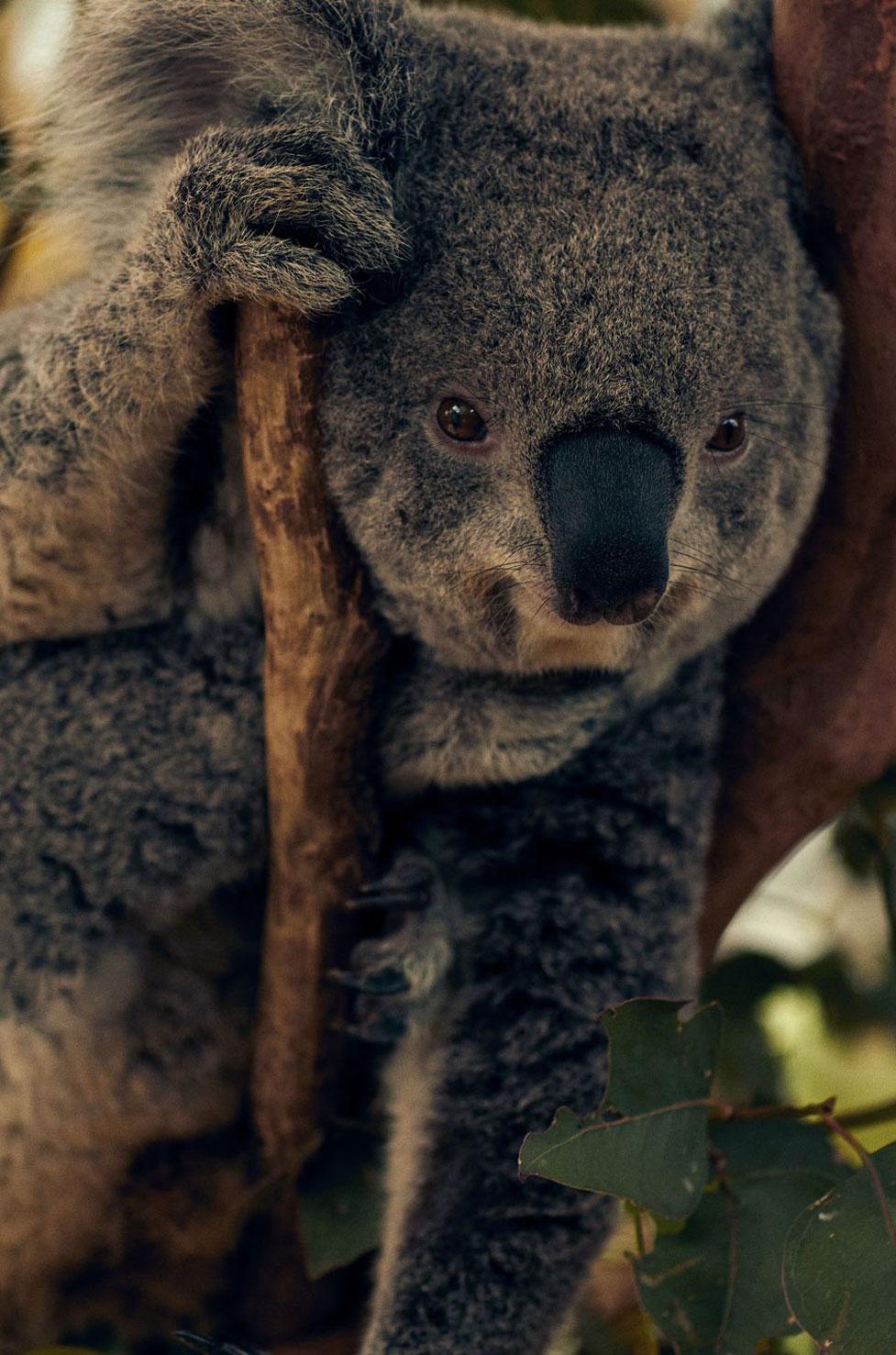 Мерел Бартен в сиднейском зоопарке / фото 03