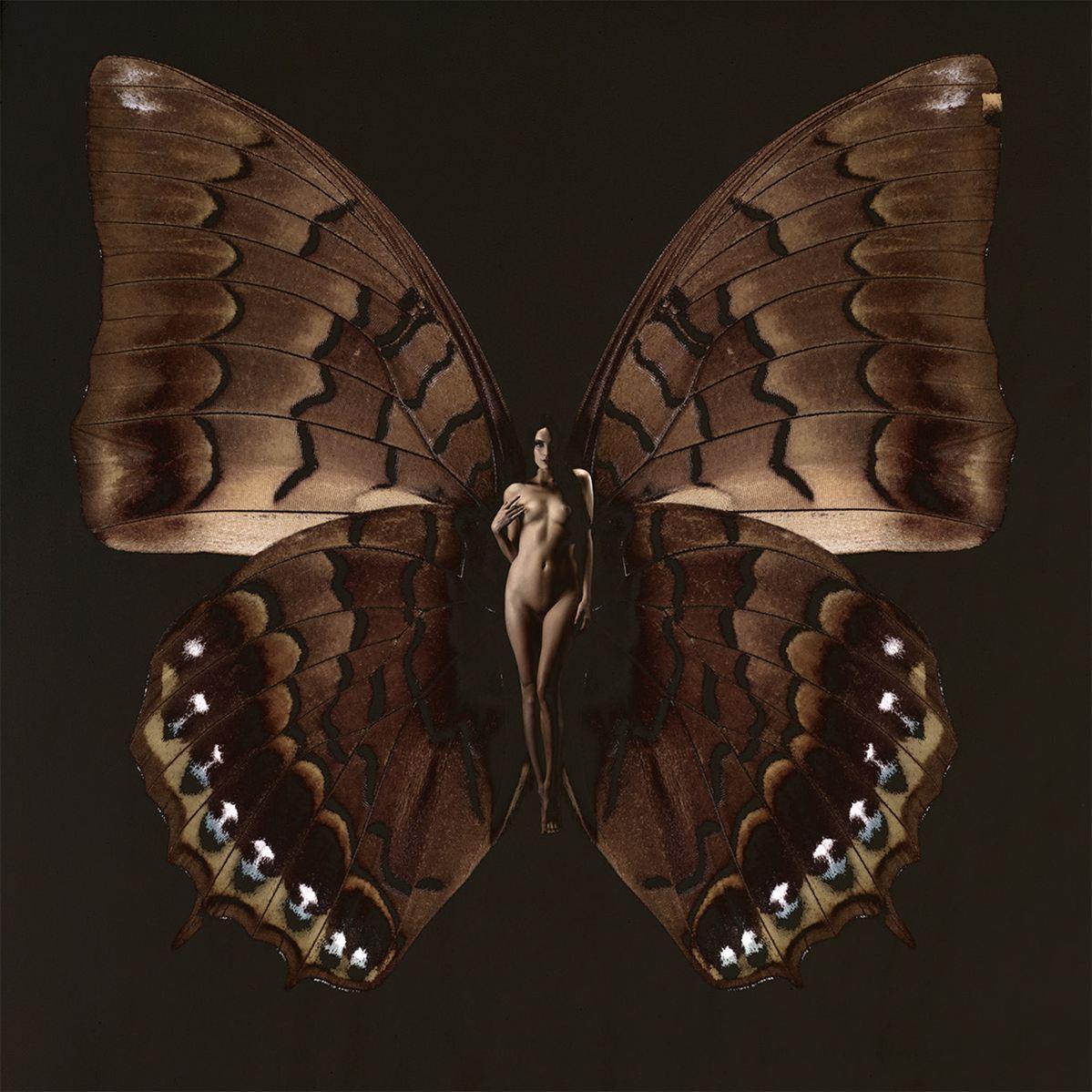 ночная бабочка сюзанна