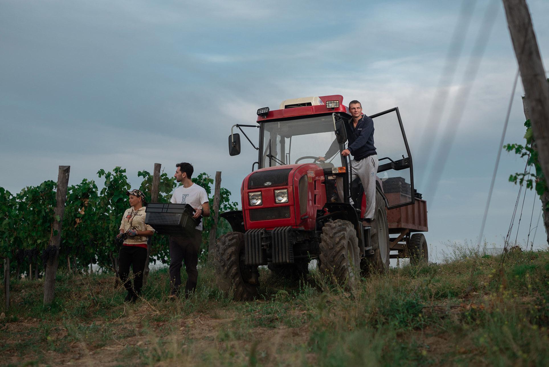 виноделы - сбор урожая и изготовление вина / фото 07