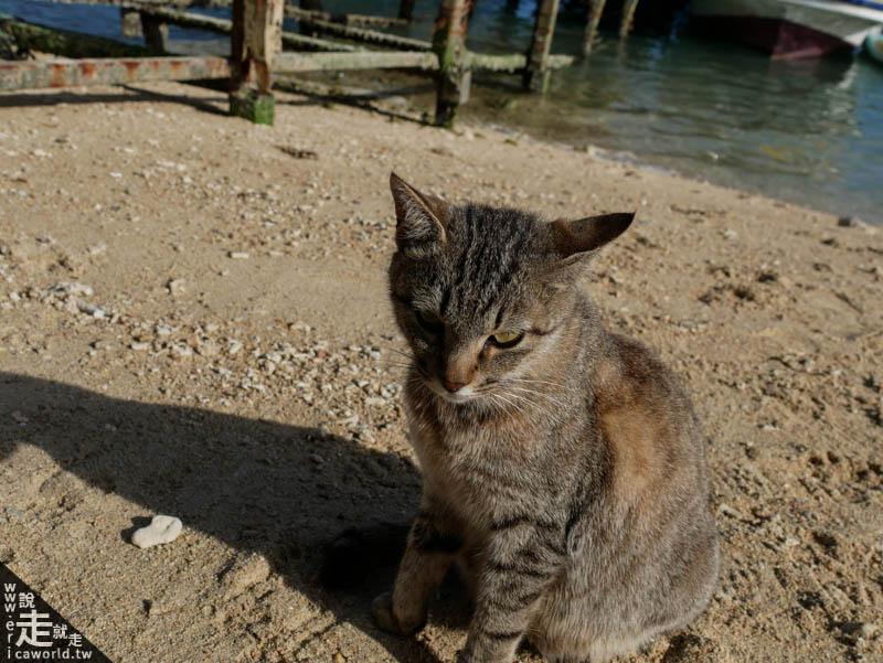新原海灘貓咪
