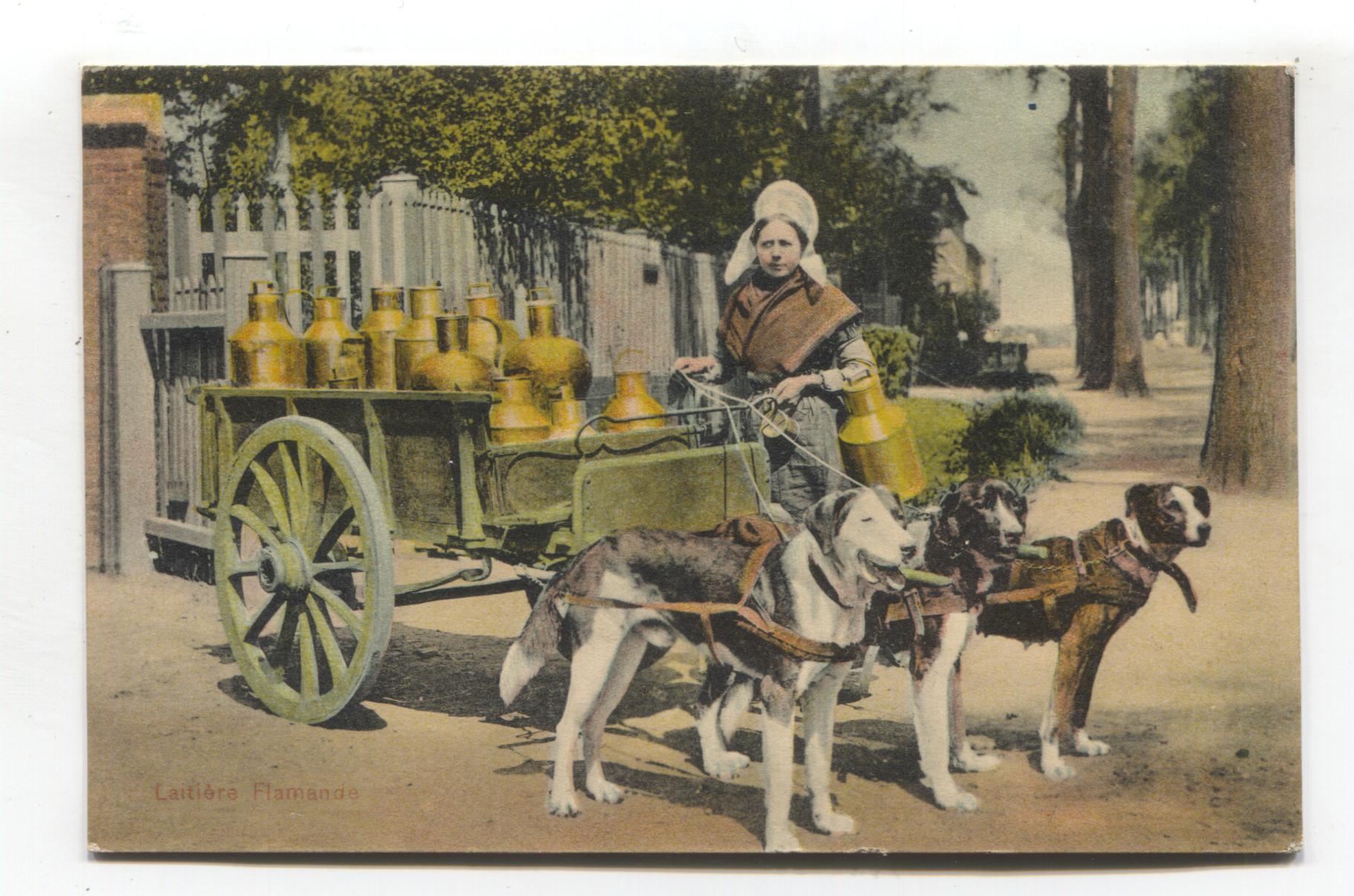 Laitiere Flamande - dairy dog cart & woman - 1908 used Belgium postcard