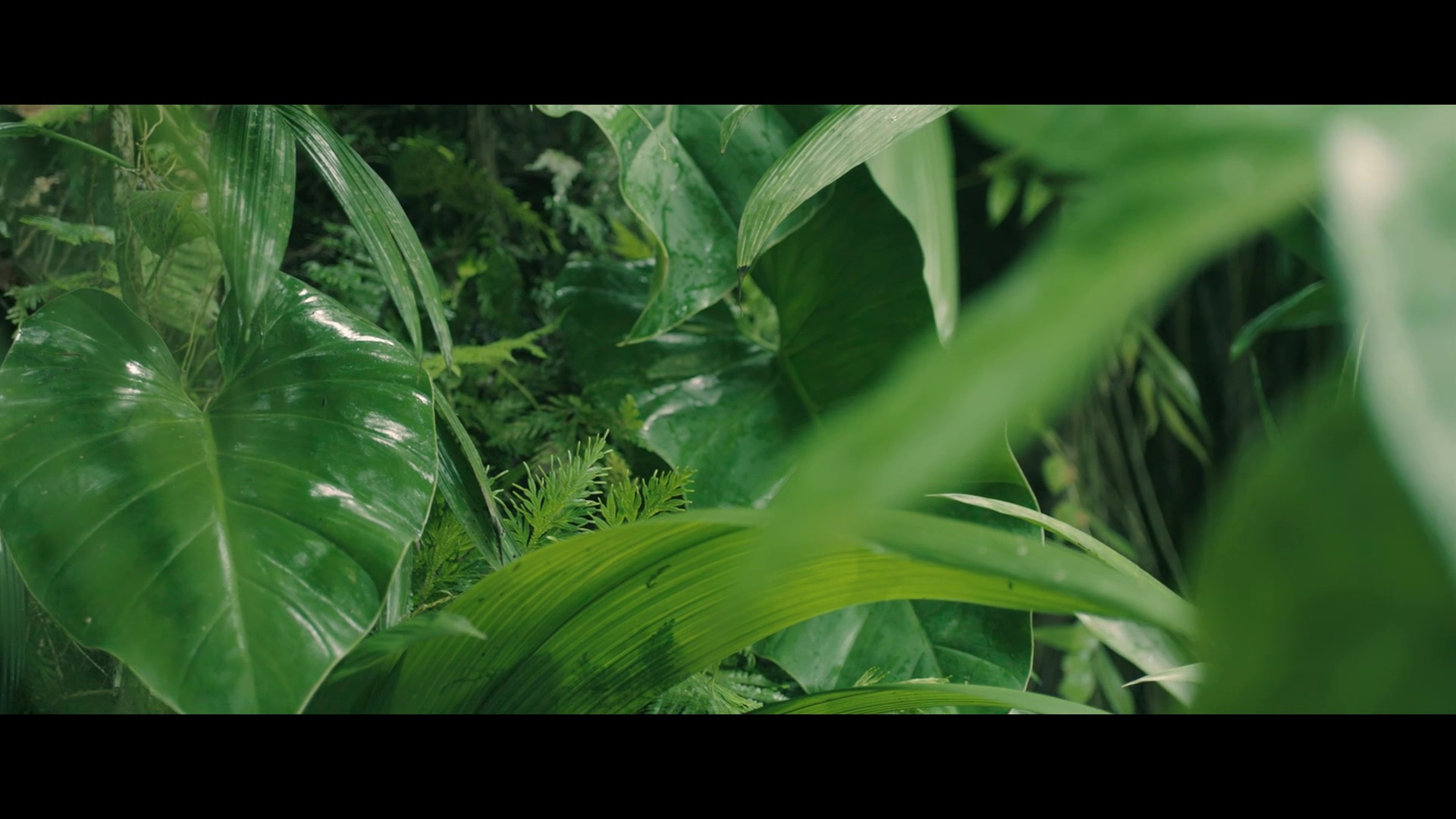Minusculos 2 Full HD1080p Audio Sin Dialogos[Animacion](2019)