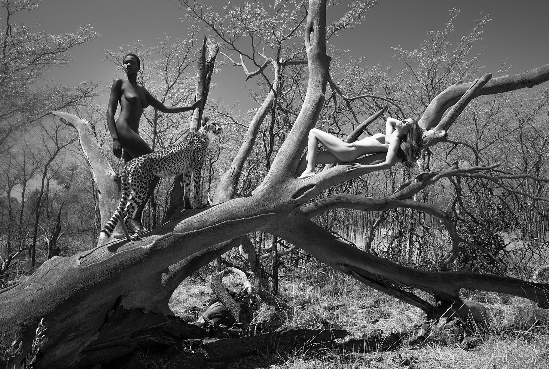 эротический календарь 12 чудес природы / Африка 2019 / фото 10