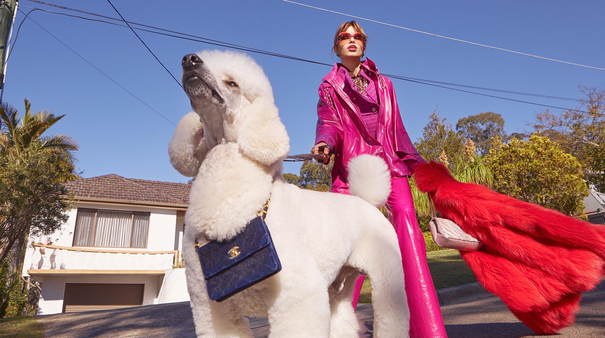 Модная девушка с собачкой / фото 01