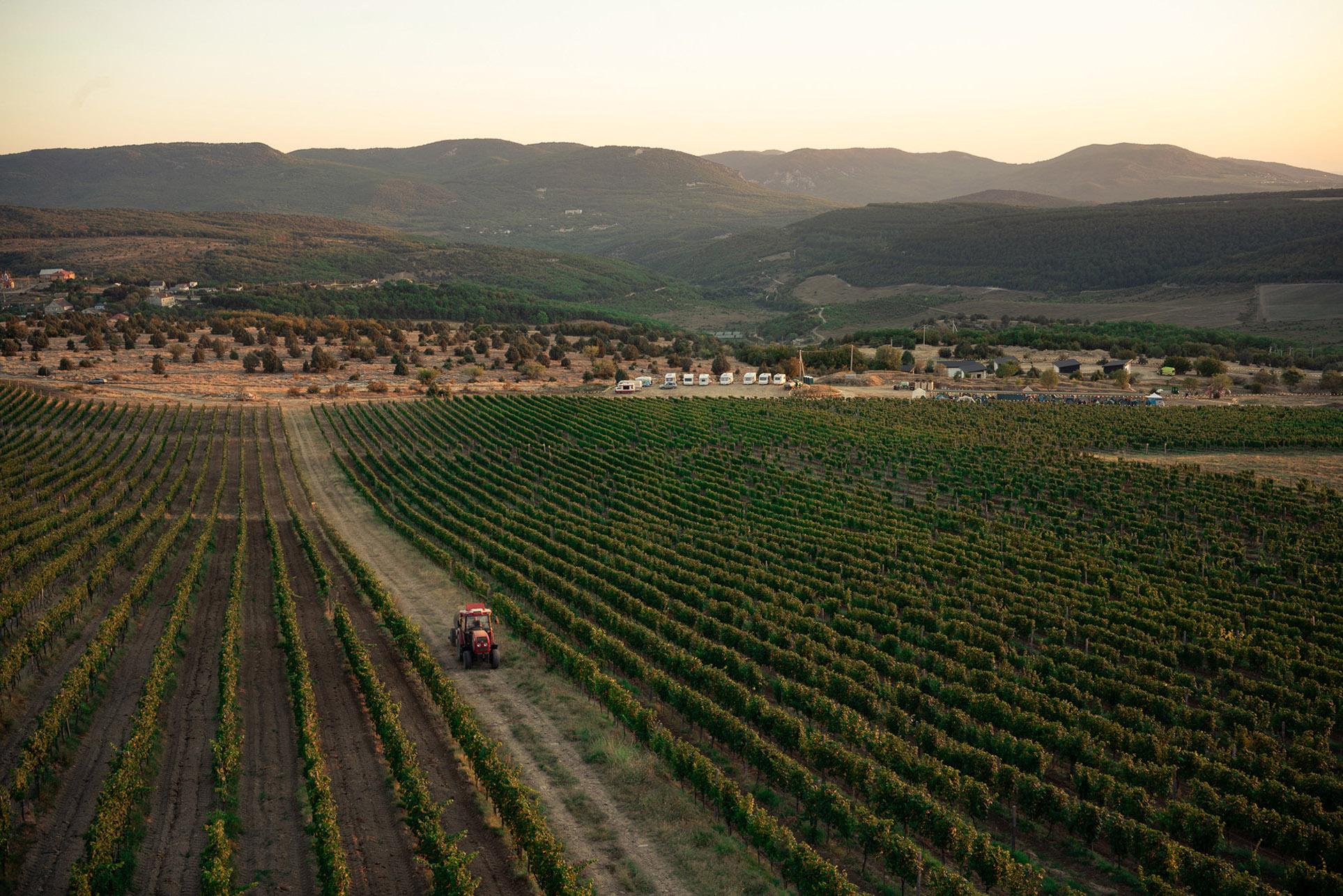 виноделы - сбор урожая и изготовление вина / фото 03